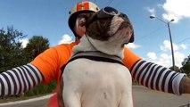 Un chien en moto salue un motard en levant sa patte
