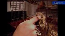Octodon dingue de papouilles !