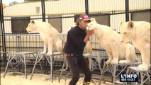 Les 12 lions blancs de Frédéric Edelstein sont au Mans