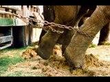 Le dressage des Animaux dans les cirques, les vérités !