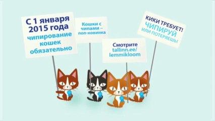 Tule kiibista oma kass soodushinnaga vahemikus 22.10 - 16.11! RUS