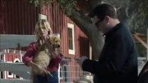 La formidable amitié entre un chien et un cheval