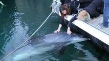 Un dauphin caressé par les passants (Brest)