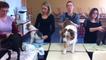 Massages et petits soins pour les chiens