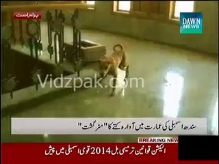 Stray dog enters in Sindh Assembly�s building