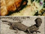 Incroci tra animali: la creatura metà uomo e metà coccodrillo | PIRATE TAPES