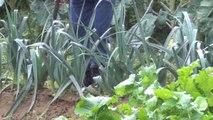 Les légumes géants de Josette et Marc