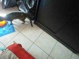 Titi le chat joue
