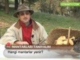 MANTARLAR HAKKINDA BİLMENİZ GEREKENLER