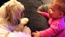 Des bébés trop mignons parlent à des chiens : Compilation 2014