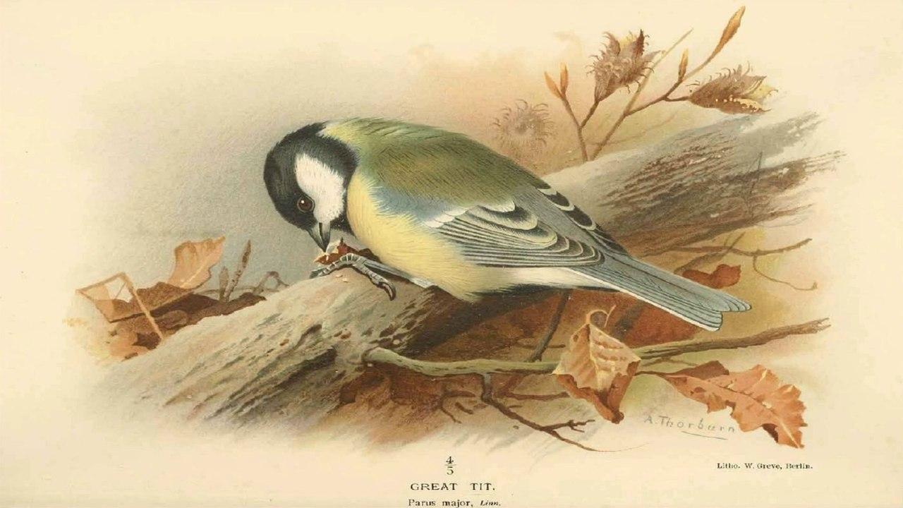 Pourquoi protéger les oiseaux ? Le regard d'une historienne (cycle Les oiseaux 1/4)