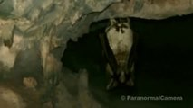 STRANGE CREATURES Real HUMAN SIZED vampire bat caught on tape in a cave  Strange creatures