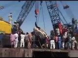 Dead Giant creature Found Near Karachi Pakistan Sea Beach 7th Feb 2012
