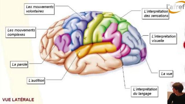 Apprendre ? Que nous disent les neurosciences aujourd'hui ? - Jeudi de l'Afref du 16 octobre 2014