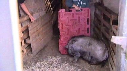 Saisie d'animaux maltraités à Chalon, en Isère