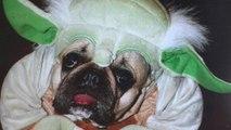 La folie des déguisements d'Halloween pour chiens
