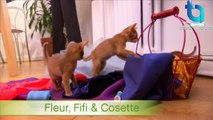 Abyssinian Remy Steals the Spotlight