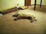 The Sleepwalking Dog