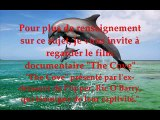 Agir Pour Les Dauphins 2  La face caché de la captivité pour les dauphins et les orques.