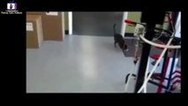 Funny Cat Videos - Episode 4 - Funny Cats - Funny Animals - Fail Compilation - Cats Fails