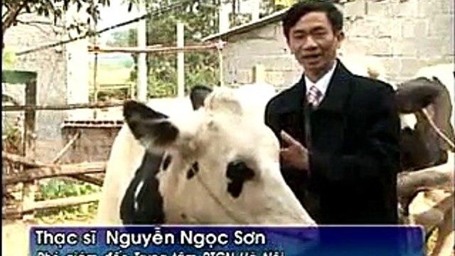 Giới thiệu bò sữa sinh ra từ tinh phân ly giới tính
