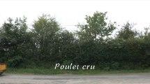 Poulet cru - L'appeau (humour)