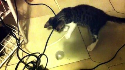 Quando ad un gattino piace tanto giocare con una pallina