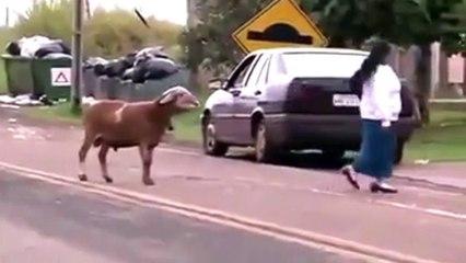 When animals attack...