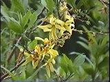 Bella Coola Natural History: Pine Siskin, Purple Finch, Calliope Hummingbird, Golden-crowned Sparrow