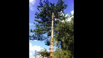 Tree Removal  and maintenance  Services Blacktown, Tree maintenance Parramatta, Tree Removal Penrith, Tree Removal Western Sydney