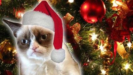 Grumpy Cat's Worst Christmas Ever trailer | DAILY REHASH | Ora TV