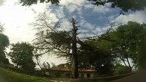 ACCIDENT L'envol du bûcheron et chute d'arbre VIOLENTE