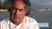 Campagne REMMOA Nouvelle-Calédonie - Les mammifères marins, témoins du milieu