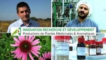 Innovation recherche et développment - Production de Plantes Médicinales et Aromatique