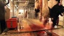 Le scandale de la viande halal (reportage complet) - Envoyé spécial du 16 Février 2012