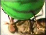 Insectes acrobates - Sont fous ces jap