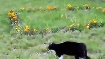 Chat drole - vidéos de chats droles - chat trop -