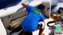 Sea Lion jumps on fishing boat, gets rewarded with huge fish.