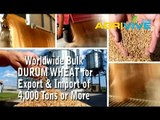 Acquire Bulk Durum Wheat for Exporting, Durum Wheat Exporters, Durum Wheat Exporter, Durum Wheat Exports, Export, Export