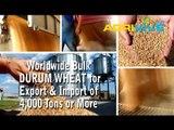 Acquire Bulk Durum Wheat for Importing, Durum Wheat Importers, Durum Wheat Importer, Durum Wheat Imports, Import, Import