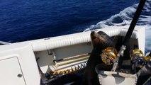 Lion de mer gourmand grimpe dans un bateau de pécheur!