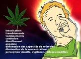 Le cannabis a des effets immédiats