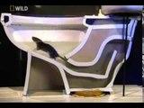 Comment les rats arrivent dans vos toilettes