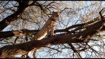 African Safari 3D (2014) - English trailer (spanish subtitles)