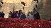 Volunteers remove poppies from Tower of London