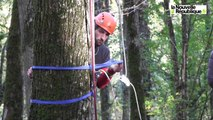 VIDEO. Fondettes : des animateurs certifiés pour grimper aux arbres