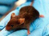 Mind-Controlled Mice Could Unlock New Techniques to Treat Illness