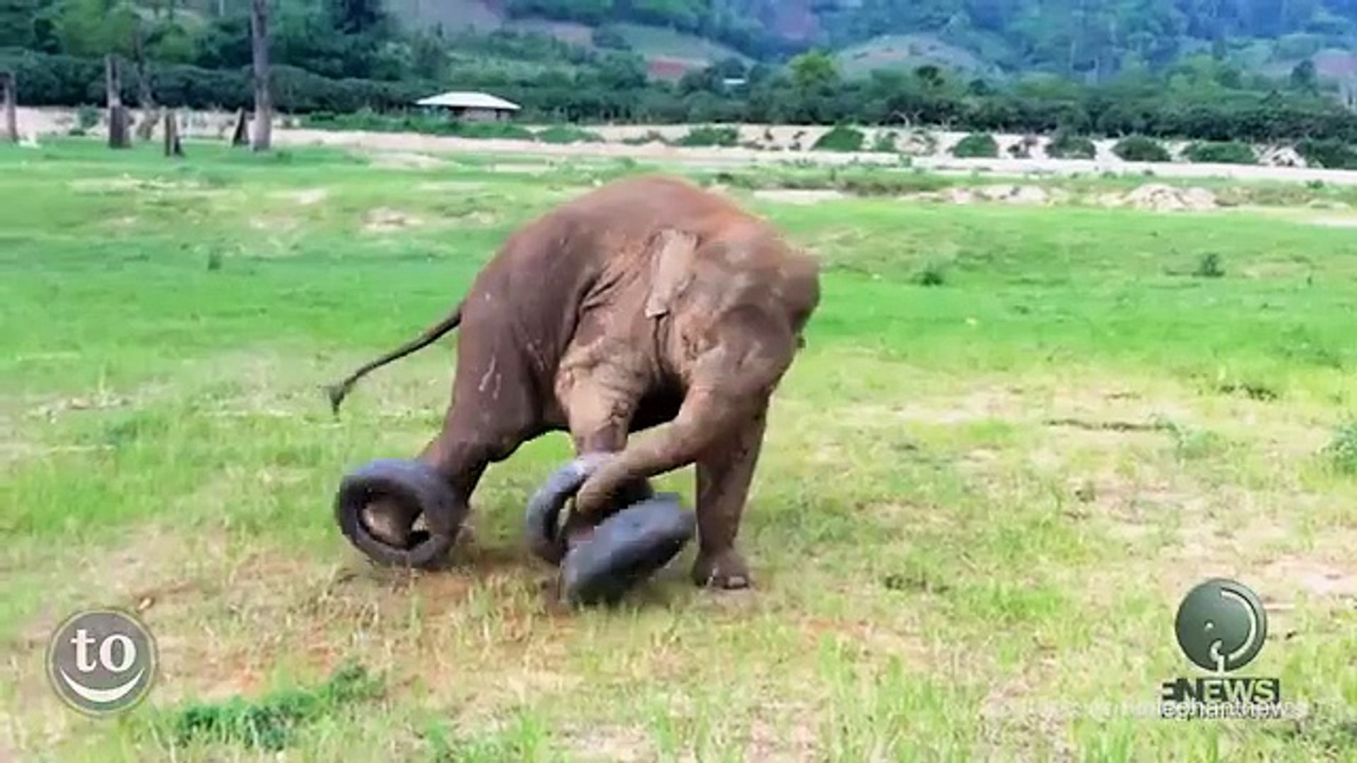 So cute Clumsy Baby Elephants : 2 min of pure happiness!