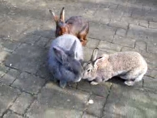 Our rabbits I