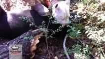 Maltrattamento animali, sgominata banda che addestrava cani a combattere contro cinghiali